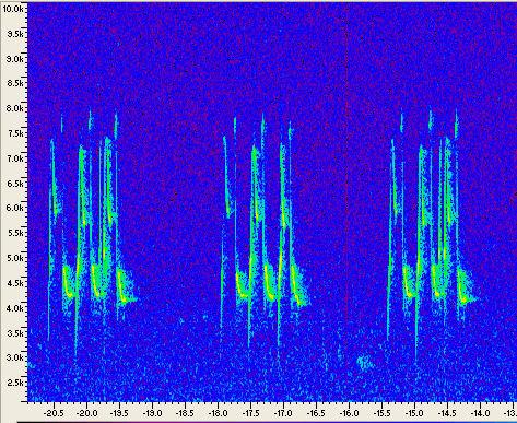 Espectrograma del canto de Parus ater.